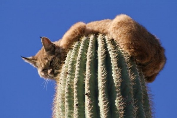 kaktus-002