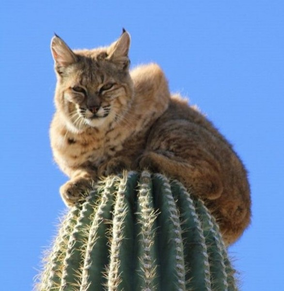 kaktus-004