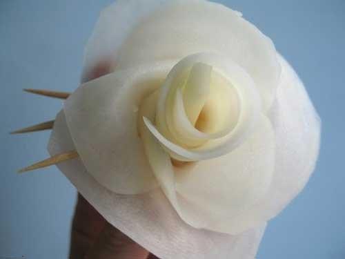 Roses_08