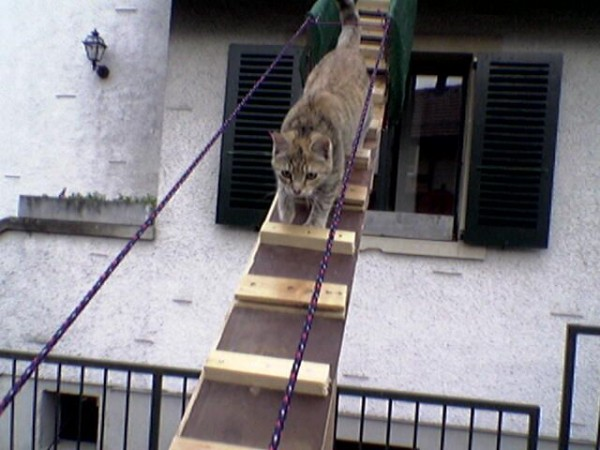 stairs_for_cats_06