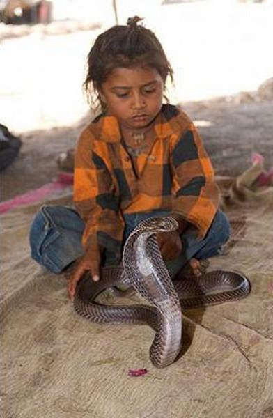 snake_09