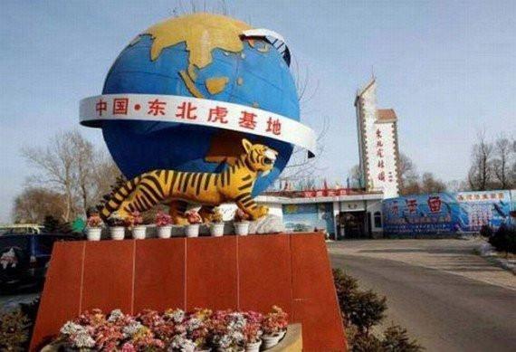 Tiger_01