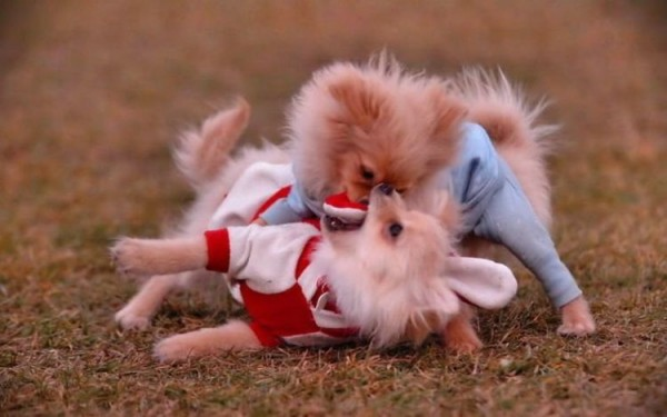 dogs_15