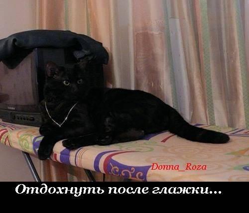 Cats_08
