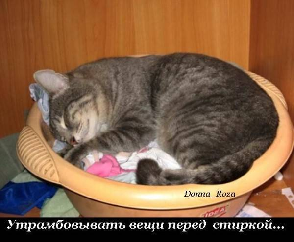 Cats_11