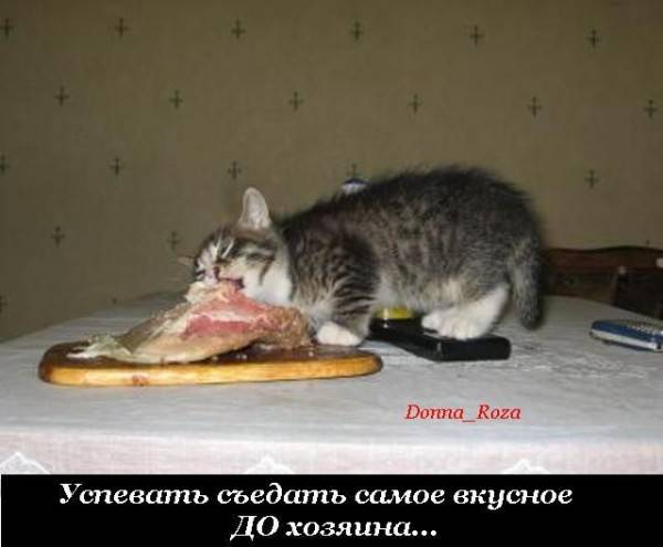 Cats_18