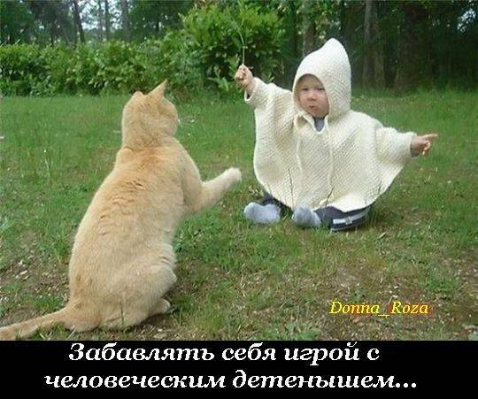 Cats_19