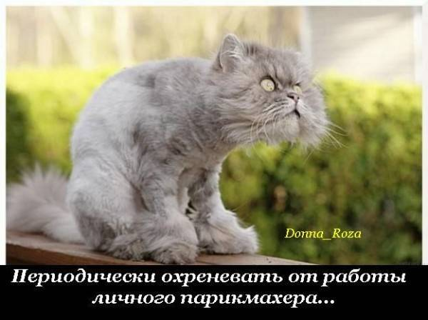Cats_20