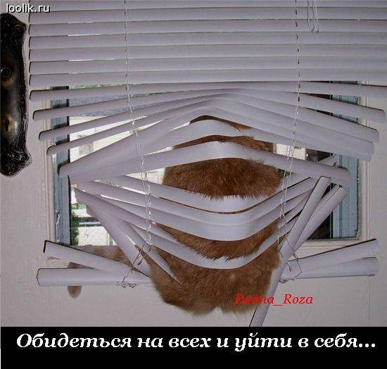 Cats_21