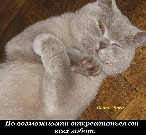 Cats_22
