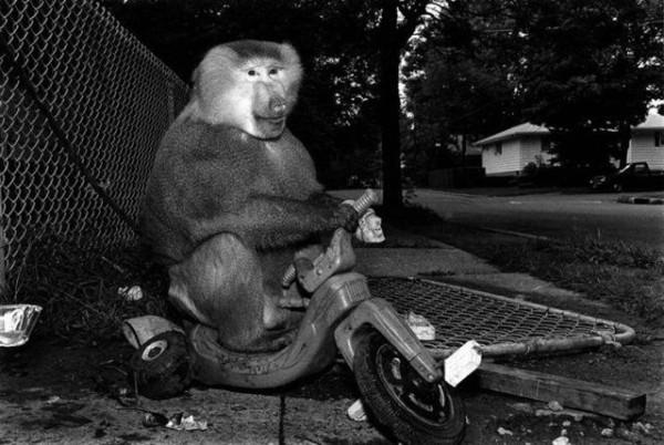 Monkey_03