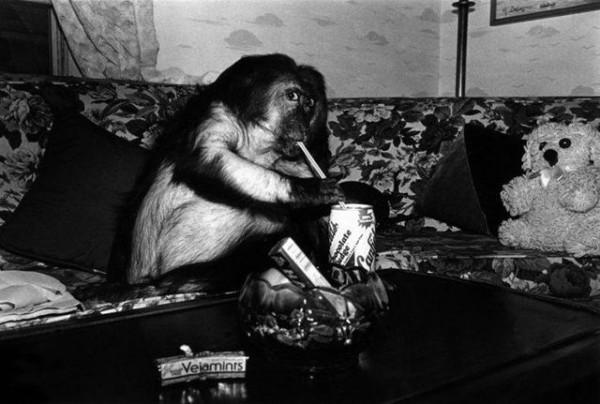 Monkey_05