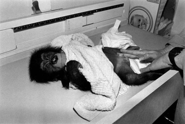 Monkey_06