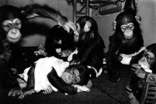 Monkey_07