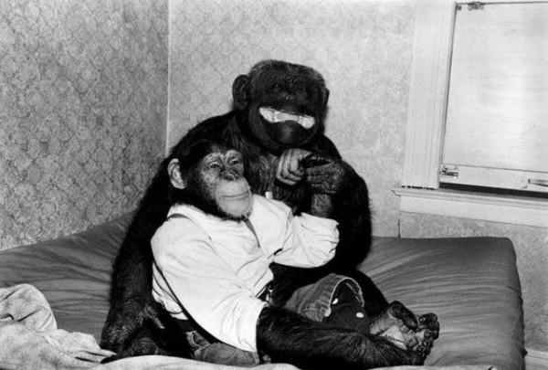 Monkey_08