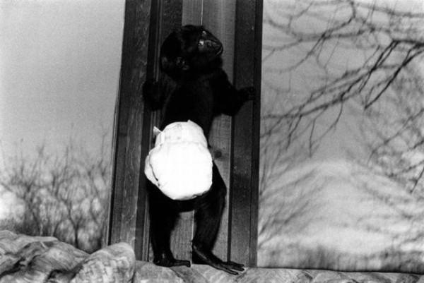 Monkey_09