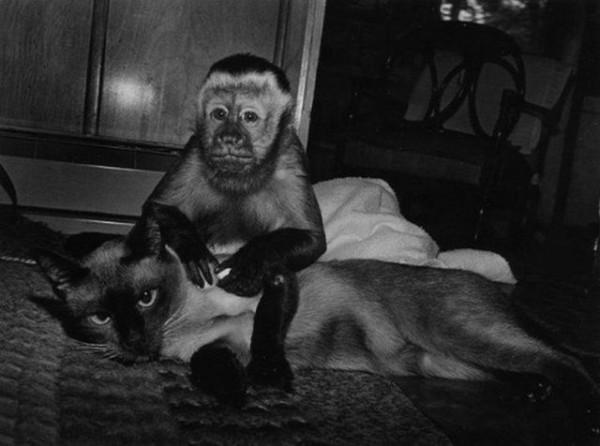 Monkey_15