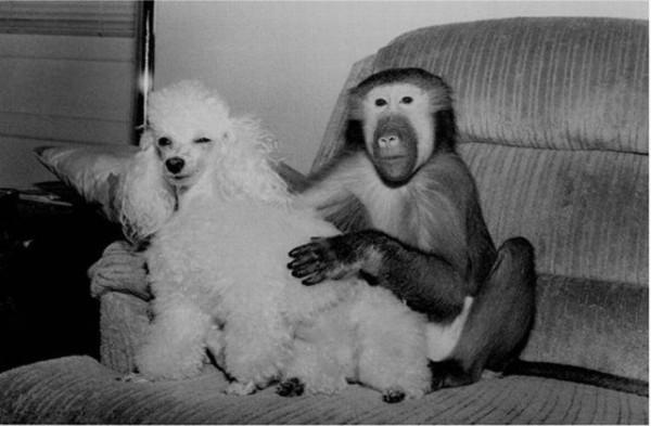 Monkey_18