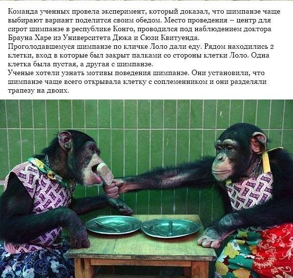 obezyana-001
