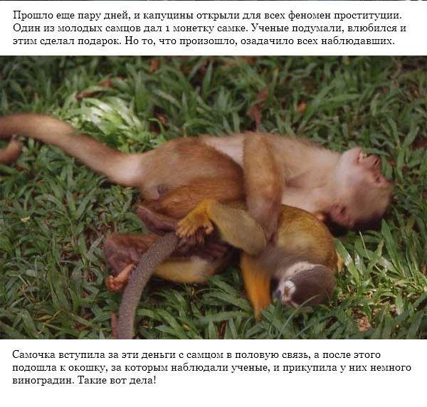 Секс с обезьяной и человеком
