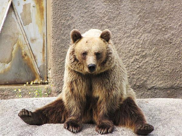 medved-005