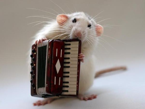 002_white_rats