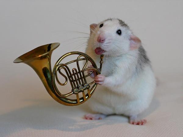 004_white_rats