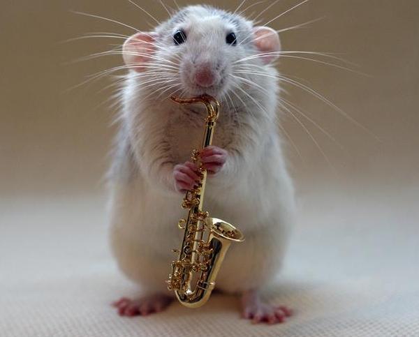 005_white_rats