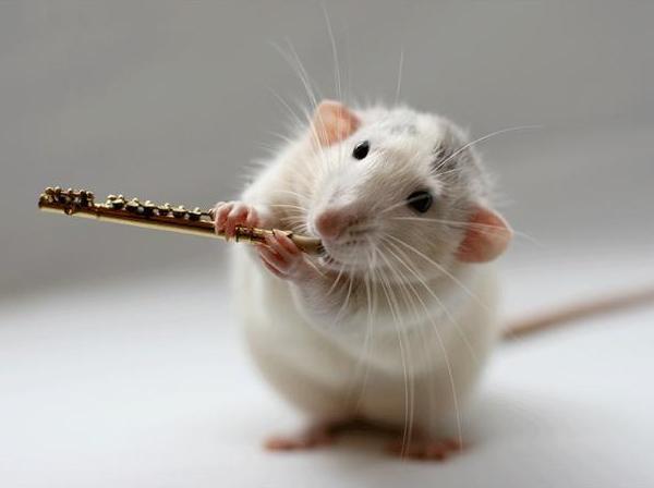 007_white_rats