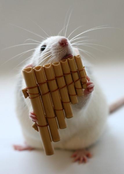 009_white_rats