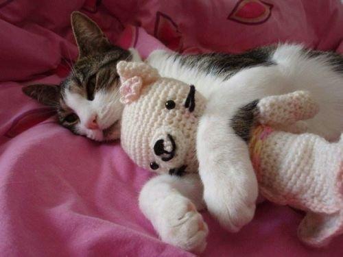 Cats_10