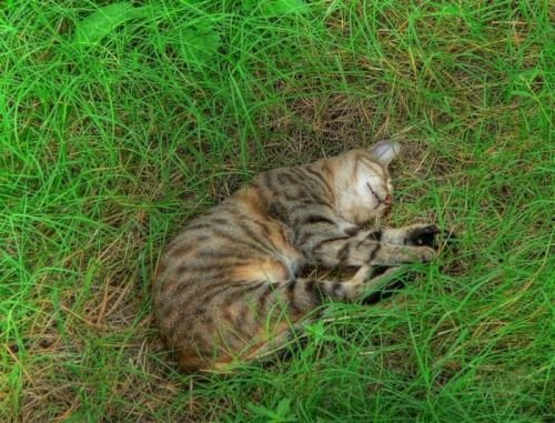 Cats_15