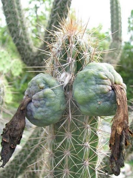 Cactus_03
