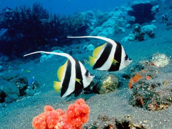 the-great-barrier-reef-of-australia06