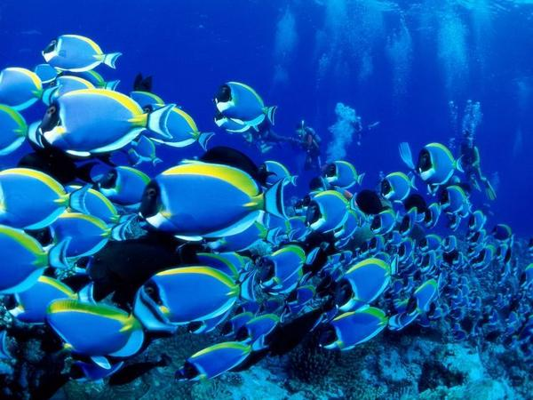the-great-barrier-reef-of-australia09