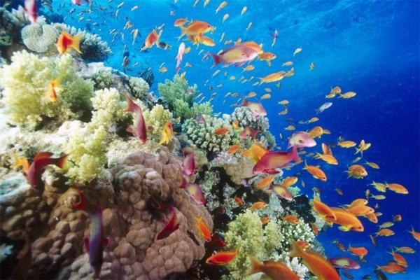the-great-barrier-reef-of-australia12