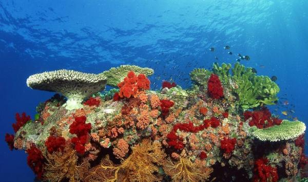 the-great-barrier-reef-of-australia21