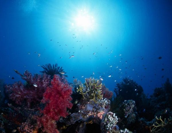 the-great-barrier-reef-of-australia23