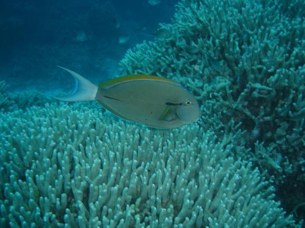 the-great-barrier-reef-of-australia35