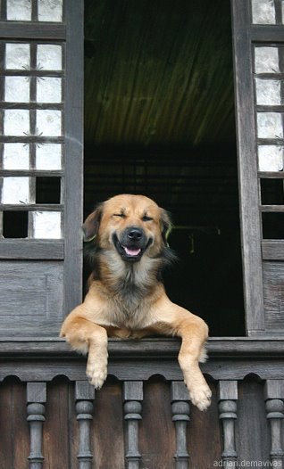 Dogs_14