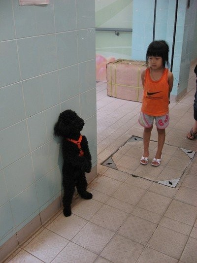 Dogs_23