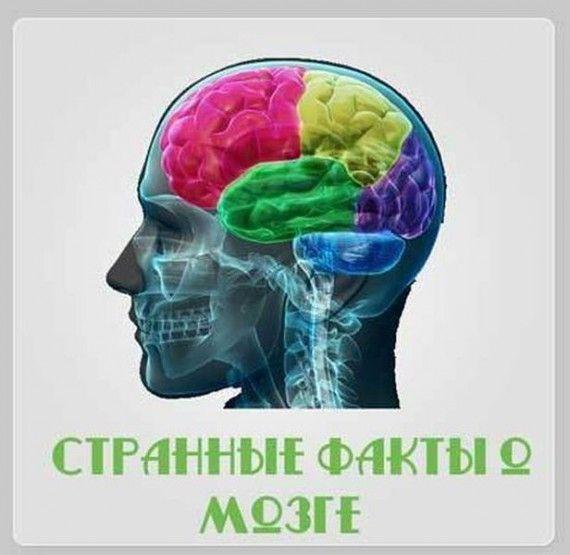 Brain_02