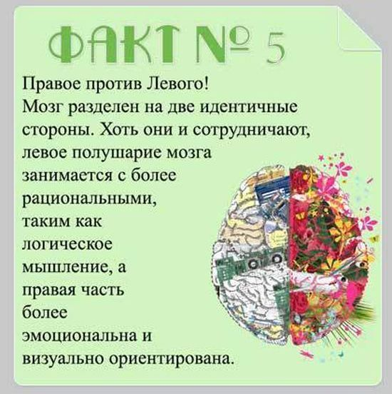 Brain_13