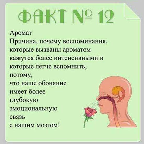 Brain_06
