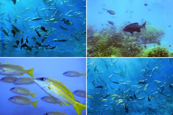 Underwater_13