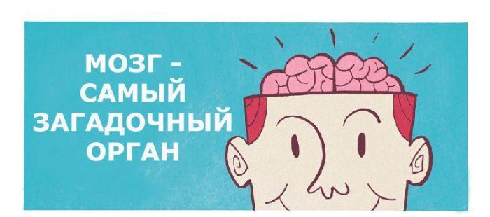 mozg-0001