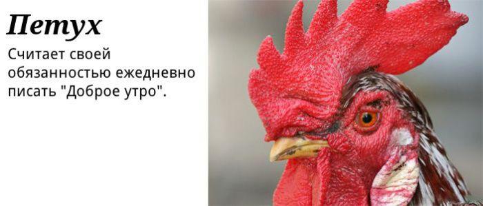 polzovatel-0003