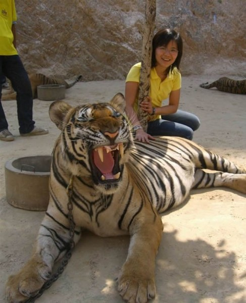 006_tiger_temple