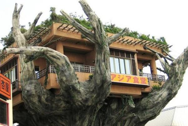 002_house_tree