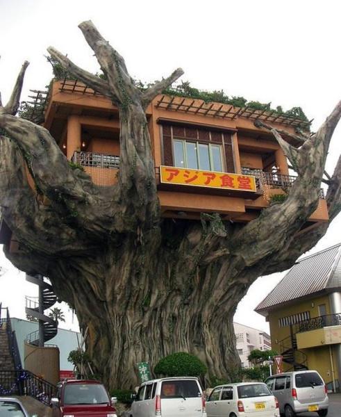 003_house_tree